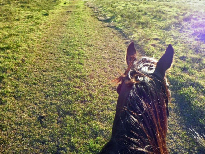 A photo taken by my friend Kim during our horseback ride in beautiful Kohala.