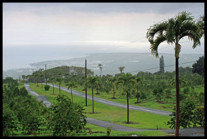 Looking over the Ueshima Coffee Company estate and down on Kona and the Pacific.