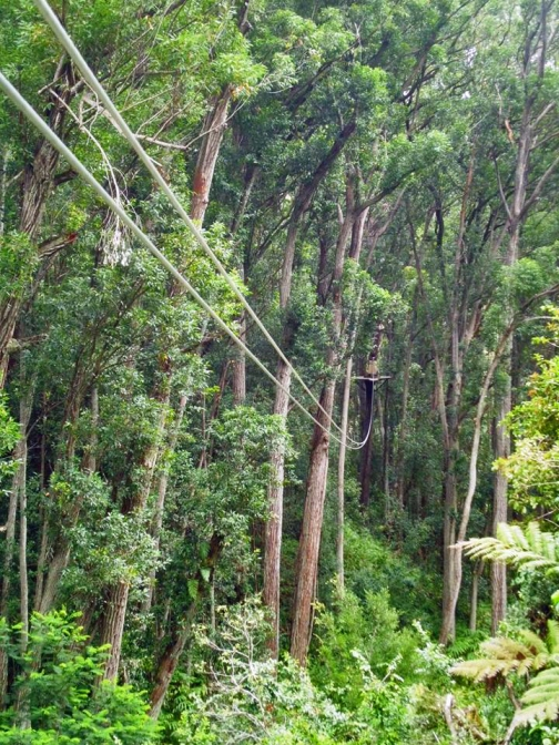 One of the first ziplines (photo courtesy of Kim's camera)