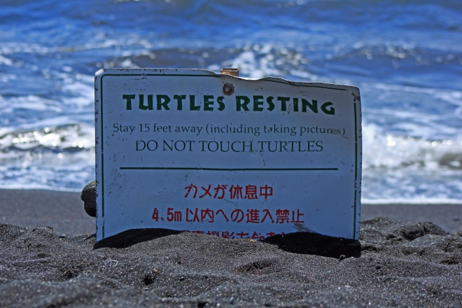 Signs reminding visitors not to bother the sea turtles, and they were very closely adhered to!