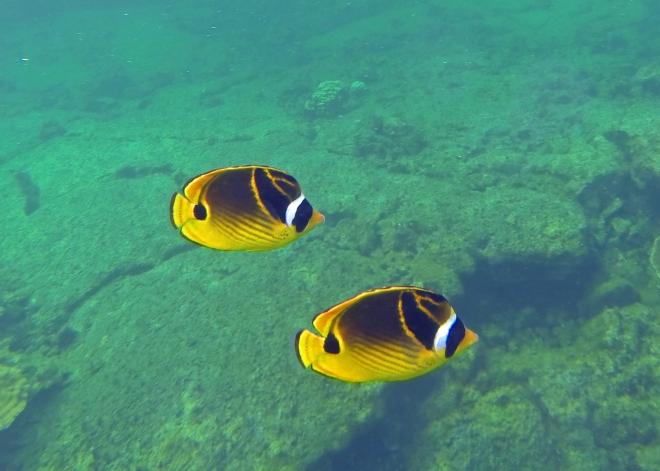 Underwater life at Kapoho Tide Pools.