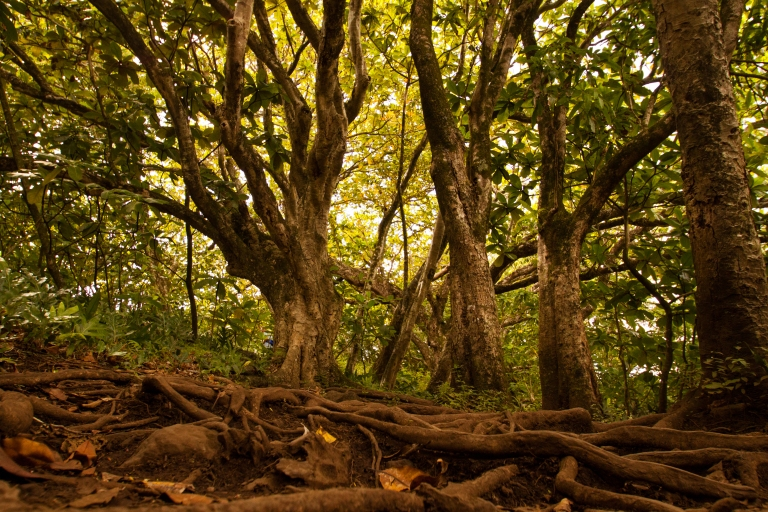 The first portion of the hike is the hardest, uphill and mostly over the roots of well-grown trees.