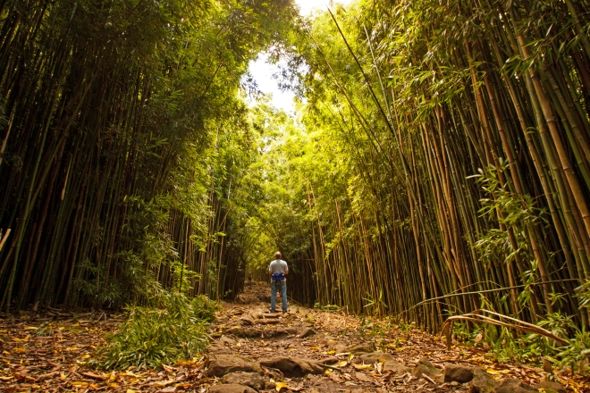 The trail crosses two bridges and a few more waterfalls before you enter the bamboo forest. It starts with a wide trail, but narrows and darkens quickly. Bring your mosquito repellant!