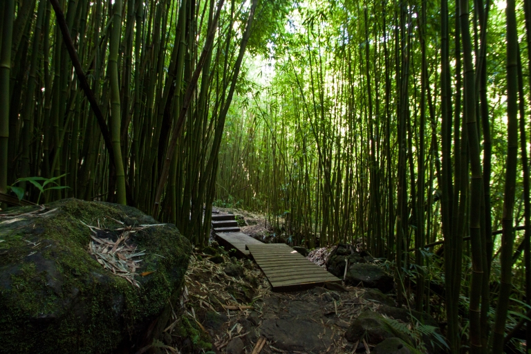 Wooden walkways are setup to elevate hikers from the extremely muddy conditions that occur when it rains.