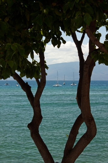 The view during lunch - a historic whaling town, Lahaina still has a lot of water action today.