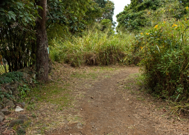 The trail starts across the street from three palm trees. It is roughly maintained, and people leave walking sticks at the start for anyone who wishes to use them.