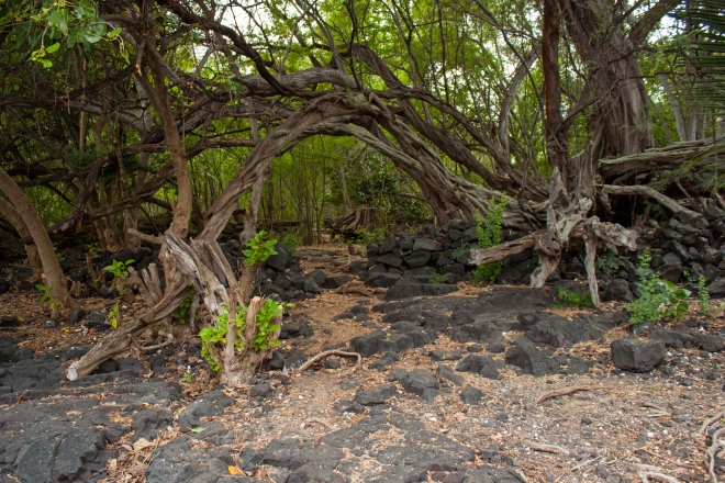 One our way out from Kealakekua.