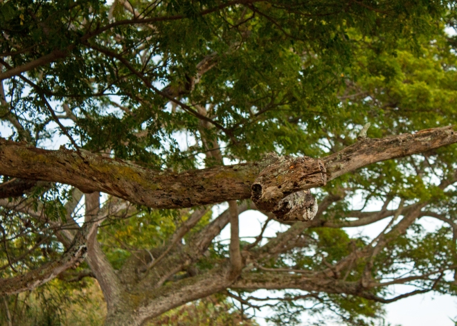 From the right angle, this tree branch looked like a ready to strike snake!