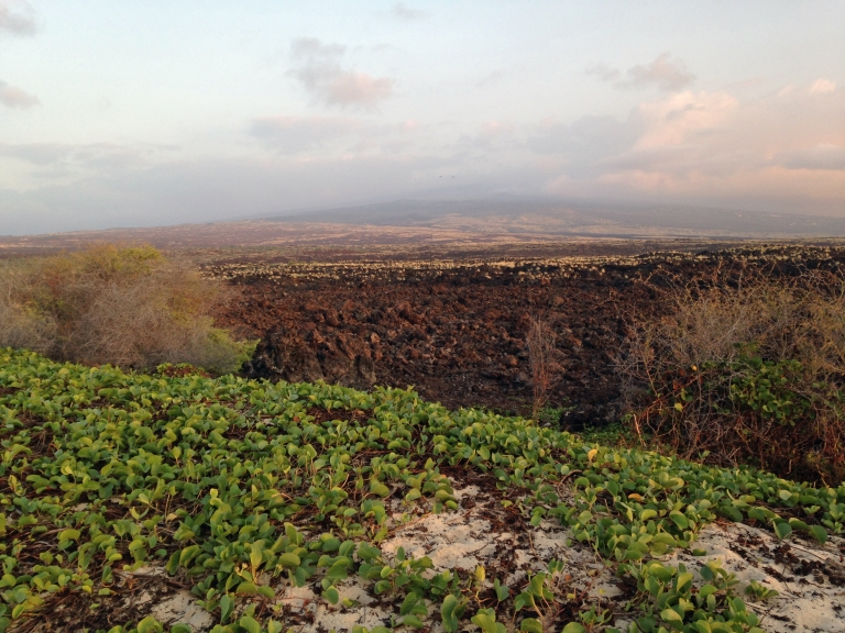 Looking at what I believe is Mauna Loa off in the distance.