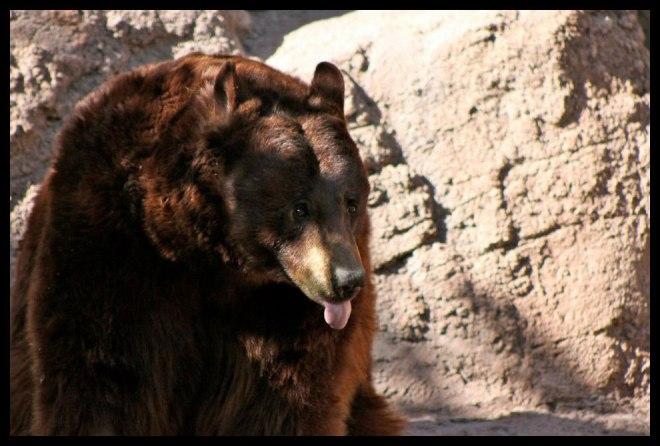 Doofy looking bear - taken back in 2012