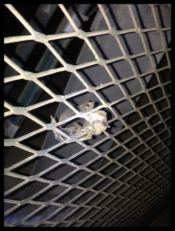 Dead bat encrusted in the fan cage.. The whole shelter looked as if no one had been there in the past 60 years.