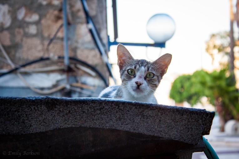 Stray cats everywhere.